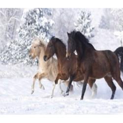 """Картина-раскраска по номерам на холсте 40*50  X1854 """"Пара лошадей"""" (н-р акрил.красок 24цв+3 кисти)"""